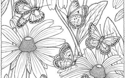 Free Butterflies & Flowers Coloring