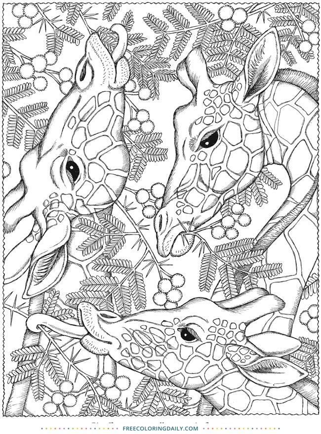 Free Giraffes Coloring Sheet