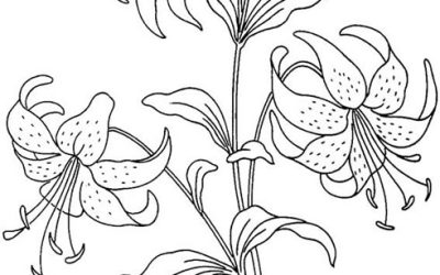 Free Easter Lily Coloring