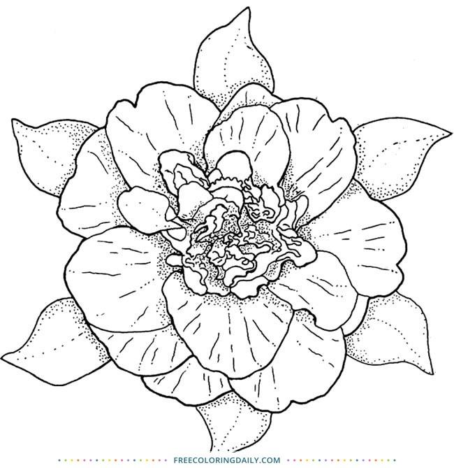 Free Beautiful Flower Coloring