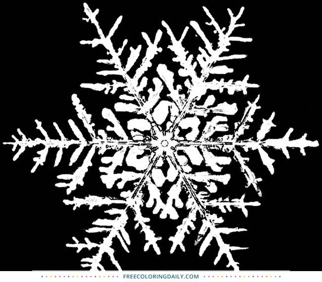 Free Snowflake Coloring