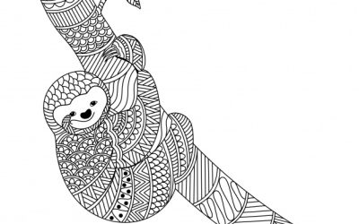 Sloth Coloring Free!