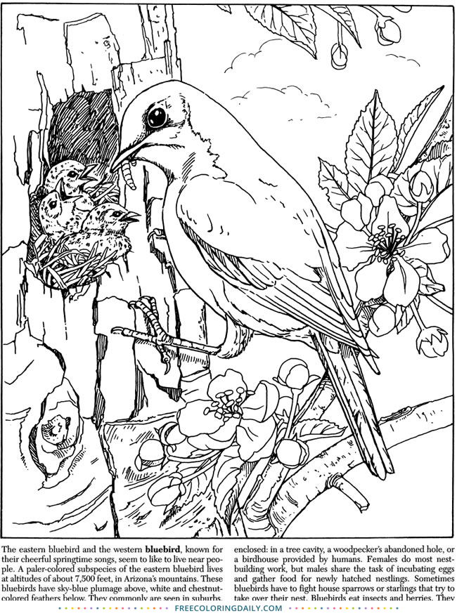 Free Bird with Nest Coloring