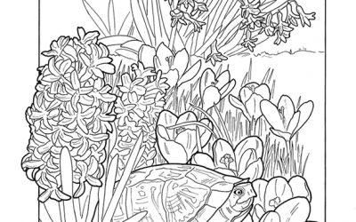 Free Spring Garden Coloring