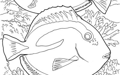 Free Fish Coloring Sheet