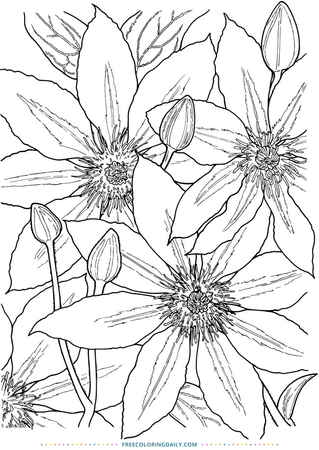 Free Floral Coloring Sheet