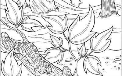 Free Nature Caterpillar Coloring
