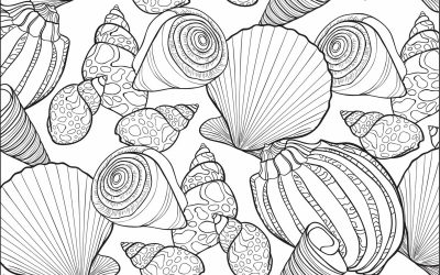 Free Seashell Coloring