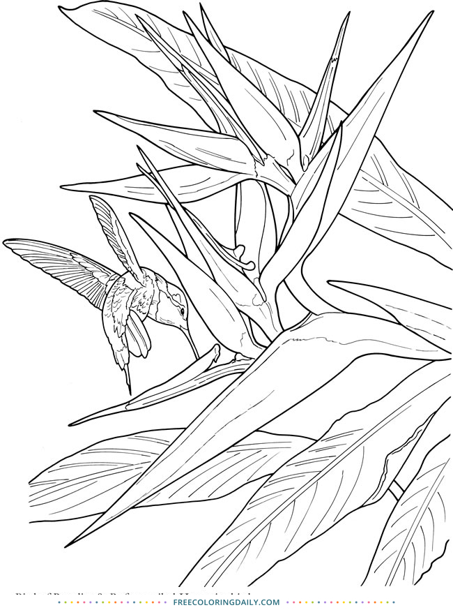 Free Tropical Coloring Page