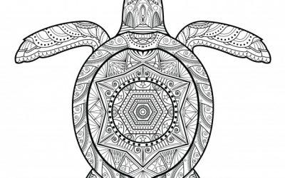 Free Pattern Turtle Coloring