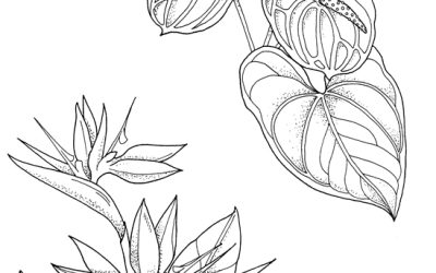 Free Tropical Flowers Coloring