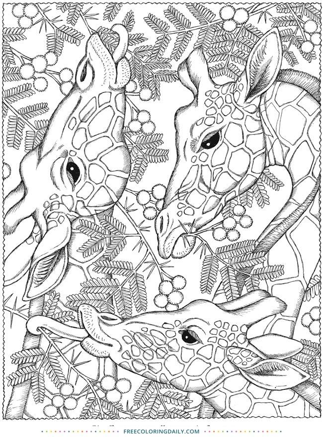 Free Giraffes Coloring Sheet