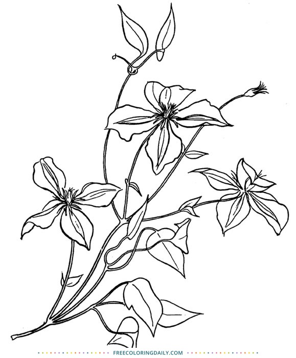 Free Flower Coloring Page