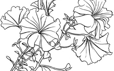 Free Pretty Flowers Coloring