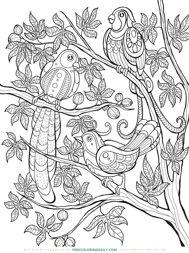 Free Tropical Birds Coloring Page