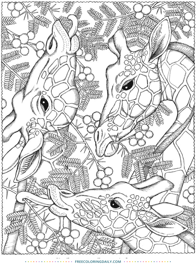 Free Giraffe Coloring Page