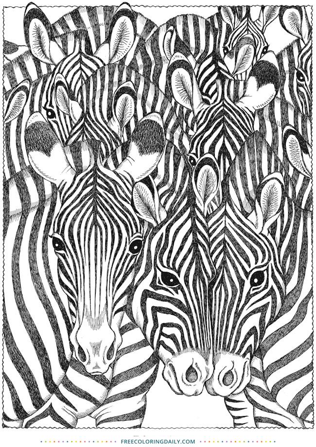 Free Fun Zebra Coloring Page