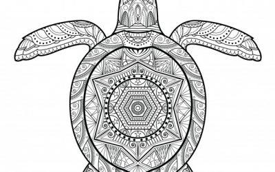 Free Pattern Turtle Coloring