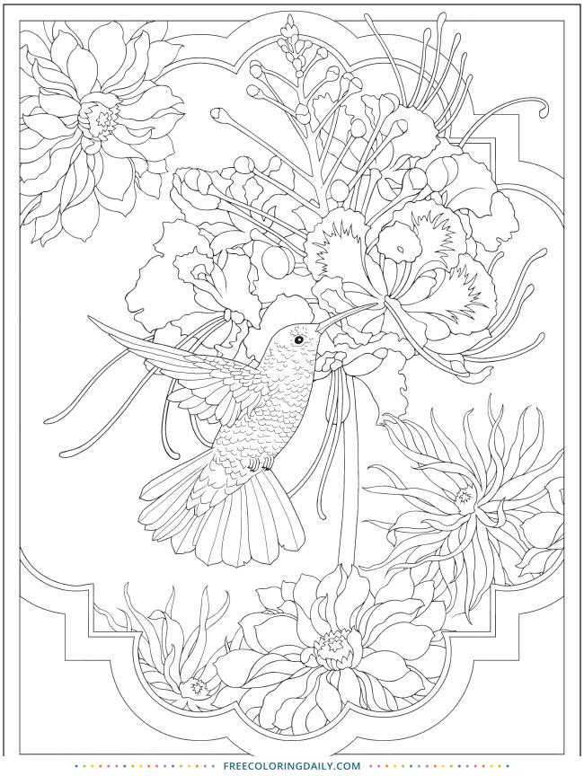 Free Pretty Hummingbird Coloring Page