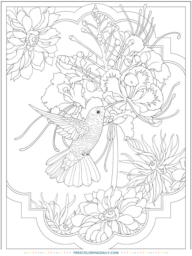 Free Pretty Hummingbird Coloring