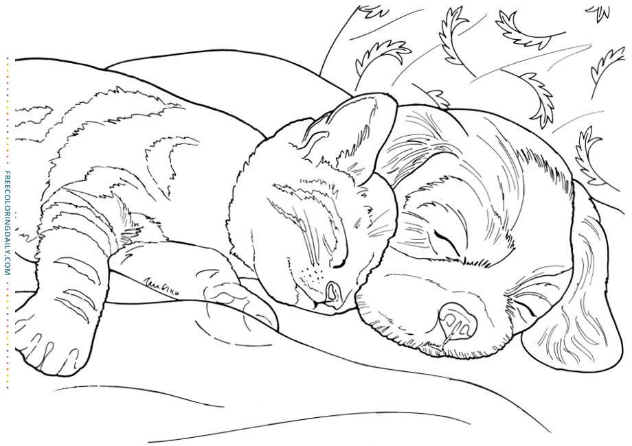 Free Dog & Cat Cuddling Coloring